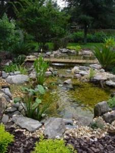 Backyard Water Gardening For Wildlife In Tampa Bay Area