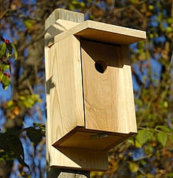 Nest boxes and birdhouses for wildlife in tampa bay area for Types of birdhouses for birds