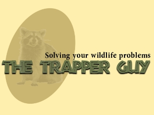 The Trapper Guy is a company that handles all of your wildlife problems. Trapping and removal, damage repair, exclusion and prevention.